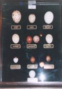 Replica Eggs by Rob Marshall Lecture 1996