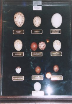 Replica Eggs by Rob Marshall