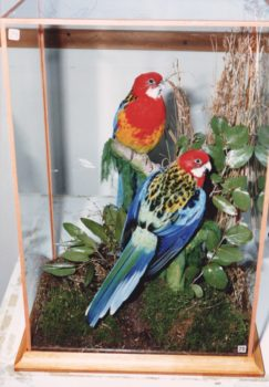 Rosellas by Don Sharp