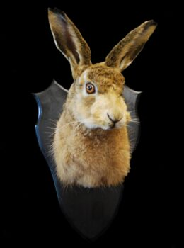 Hare Mask by Steve Newcombe