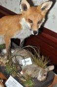 Fox and Rabbit by Dennis Baker
