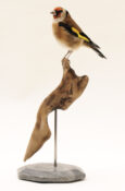 Goldfinch by Emilie Woodford