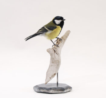 Great Tit by Emilie Woodford