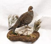 Grouse by Colin Scott