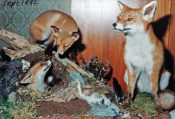 Foxes 1992