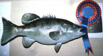 Black Bass by John Hajiloizi 1981