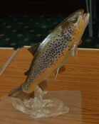 Brown Trout 2008