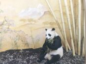 Chi Chi, the panda, by Roy Hale