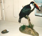 Toad and Toco Toucan 1990