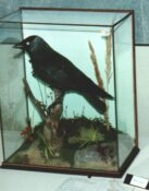 Jackdaw by Terry Young 1989