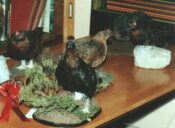Red Grouse 1990