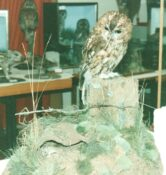 Tawny Owl & Mouse 1988