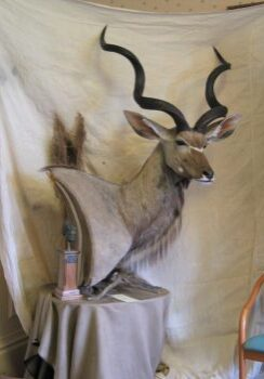 Kudu Head by Phil Leggett 2006