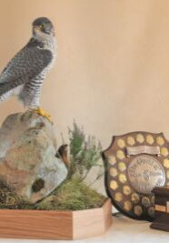 Gyrfalcon by Mike Gadd 2008